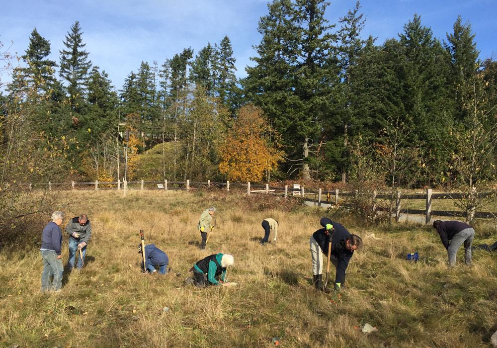 Forests of Fir – Not Scotch Broom.